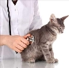 Ветеринарные клиники в Ильке